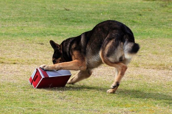 Zielobjektsuche: Hund sucht ein Zielobjekt