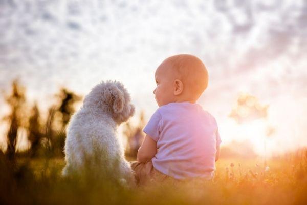 Hund und Baby auf einer Wiese