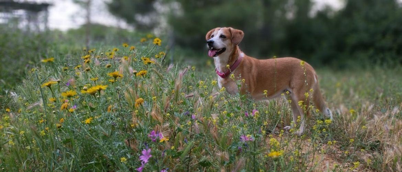 Hund steht vor Gräsern