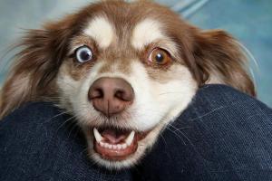 Hund mit dem Kopf zwischen den Beinen des Herrchens
