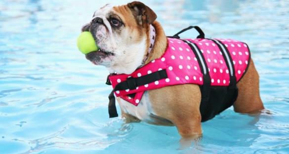 Hunde Schwimmweste: Hund steht im Wasser