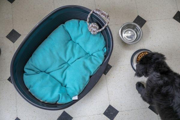 Hund steuerlich absetzen: Vierbeiner mit Zubehör