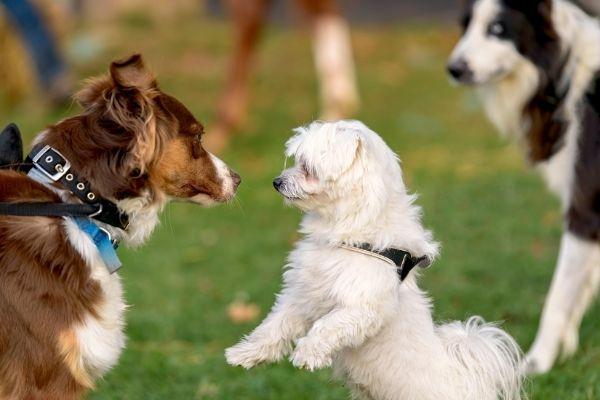 Hundebegegnungen auf einer Wiese