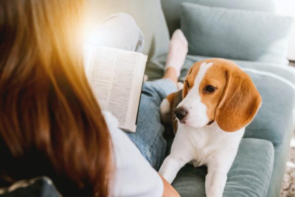 hundehaare-entfernen-hund-sofa-frau
