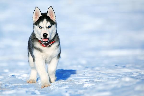 Inkontinenz bei Hunden: Hund im Schnee