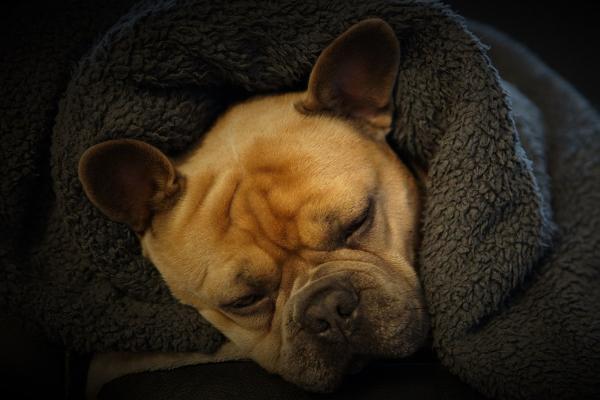 Inkontinenz beim Hund: Hund schläft