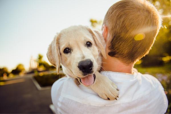 Inkontinenz beim Hund: Hund auf dem Arm