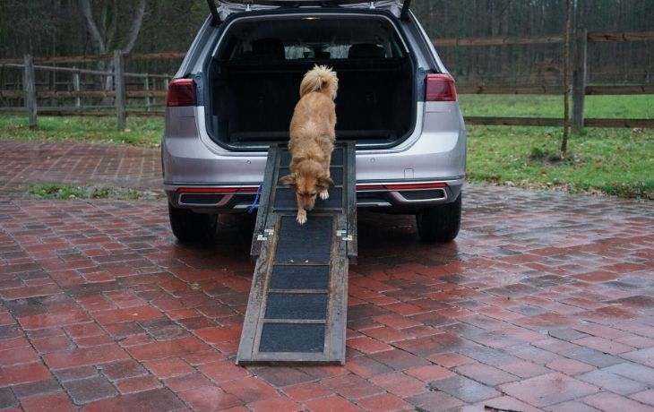 VW Passat Alltrack: Hund auf Rampe