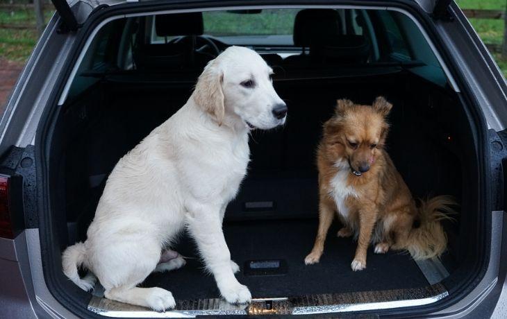 VW Passat Alltrack: Zwei Hunde im Kofferraum