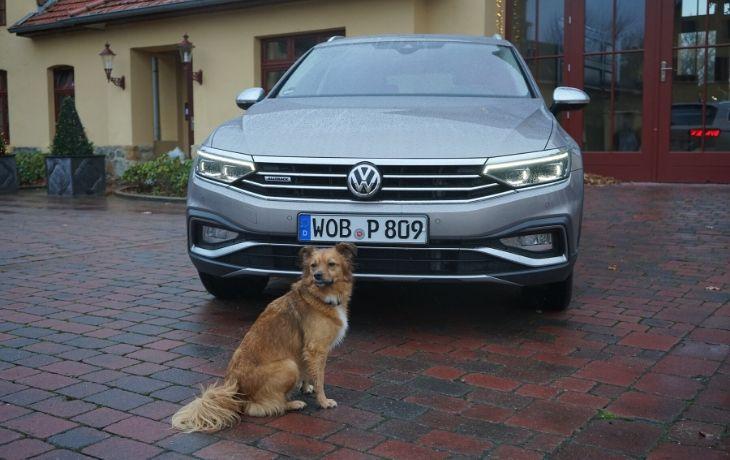 VW Passat Alltrack: Hund vor Auto