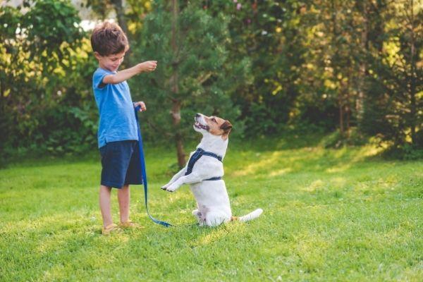 Kind übt Trickdogging mit Hund