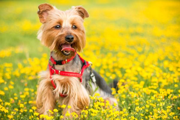 Läufigkeit bei Hündinnen: Hund auf Wiese