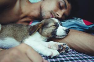 Mann und Hund schlafen zusammen im Bett