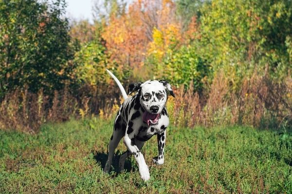 Mobility Hundesport in der Natur