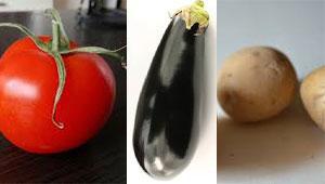 Für Hunde giftig: Rohe Tomaten, Auberginen oder Kartoffeln