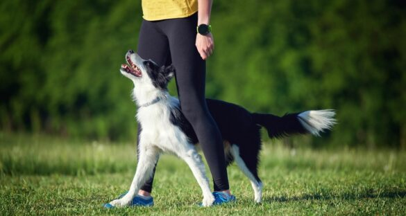 Obedience Hundesport
