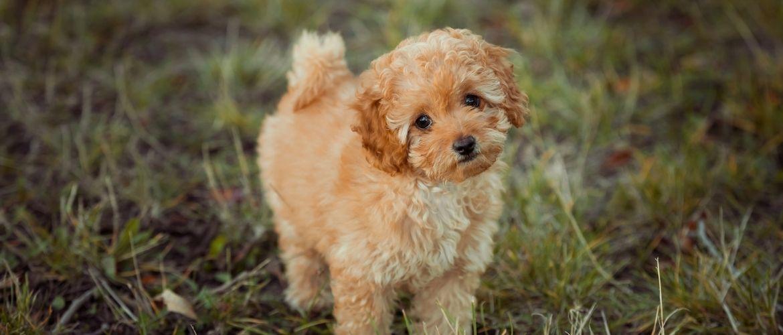 Hunde für allergiker liste