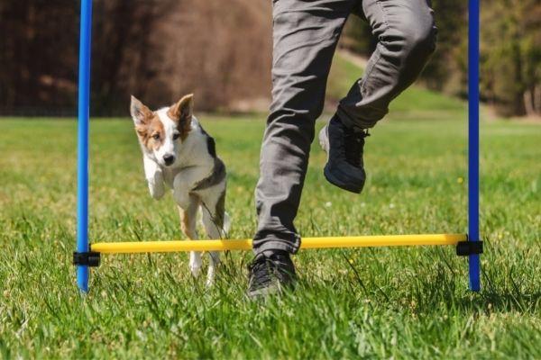 Rally Obedience: Hund überspringt Hürde