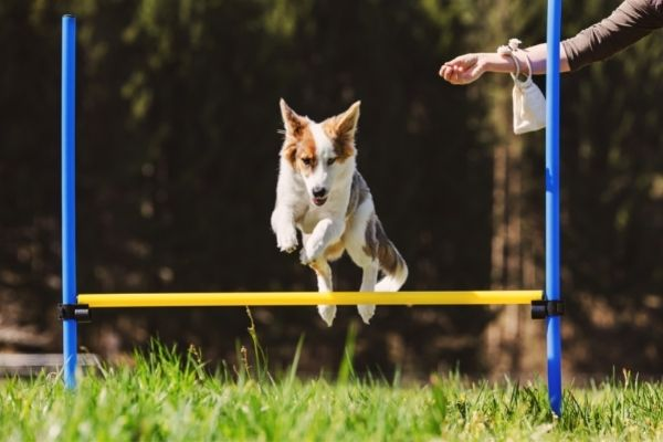 Rally Obedience Parcours