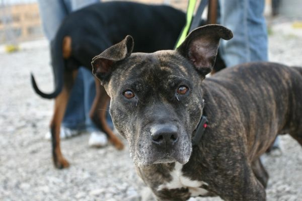 Disziplinen im Rettungshundesport: Hund an der Leine