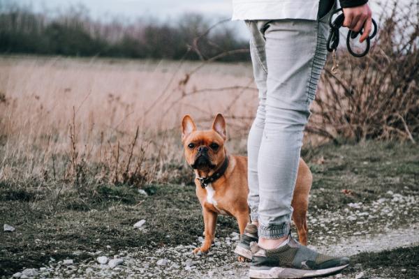 Gassi gehen: Hund in der Natur