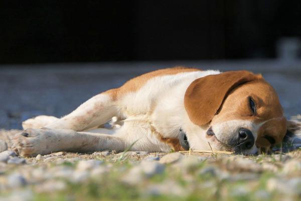 Gassi gehen: Hund liegt draußen