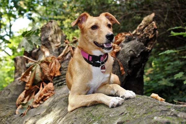 Gassi gehen: Hund liegt in der Natur