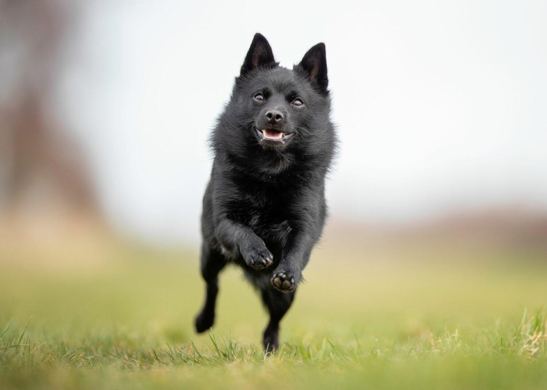 Der aktive Hund braucht einen Halter mit einem ebenso aktiven Lebensstil