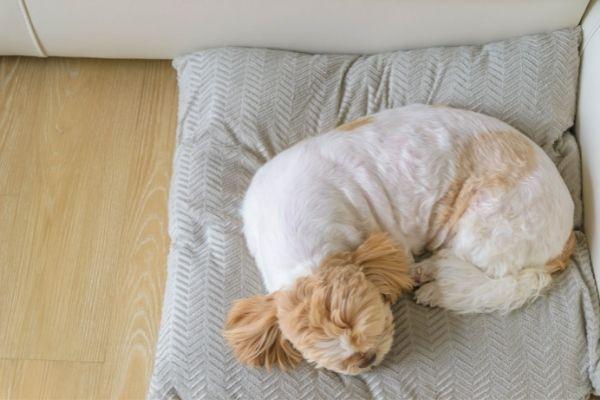 Donut als Schlafposition beim Hund
