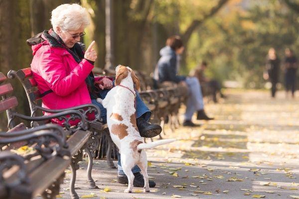 Hunderassen für Senioren: Seniorin mit Hund im Park