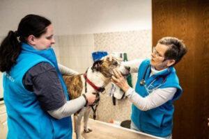 Coronahilfe Tierheime Deutschland