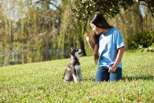 Welpen bleib beibringen: Welpe sitzt neben junger Frau auf Wiese