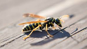 Gefahren beim Spazieren gehen: Insekten- und Schlangenbisse