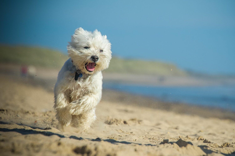 Viel Bewegung ist gut für die Gesundheit des Hundes
