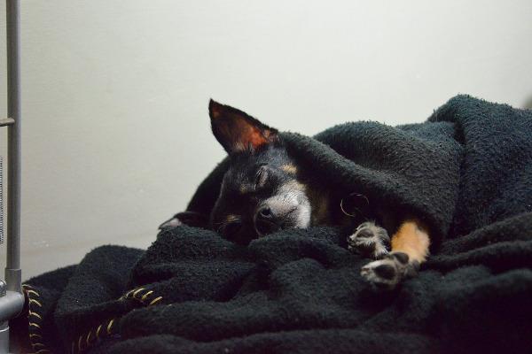 Würmer beim Hund: Hund schläft