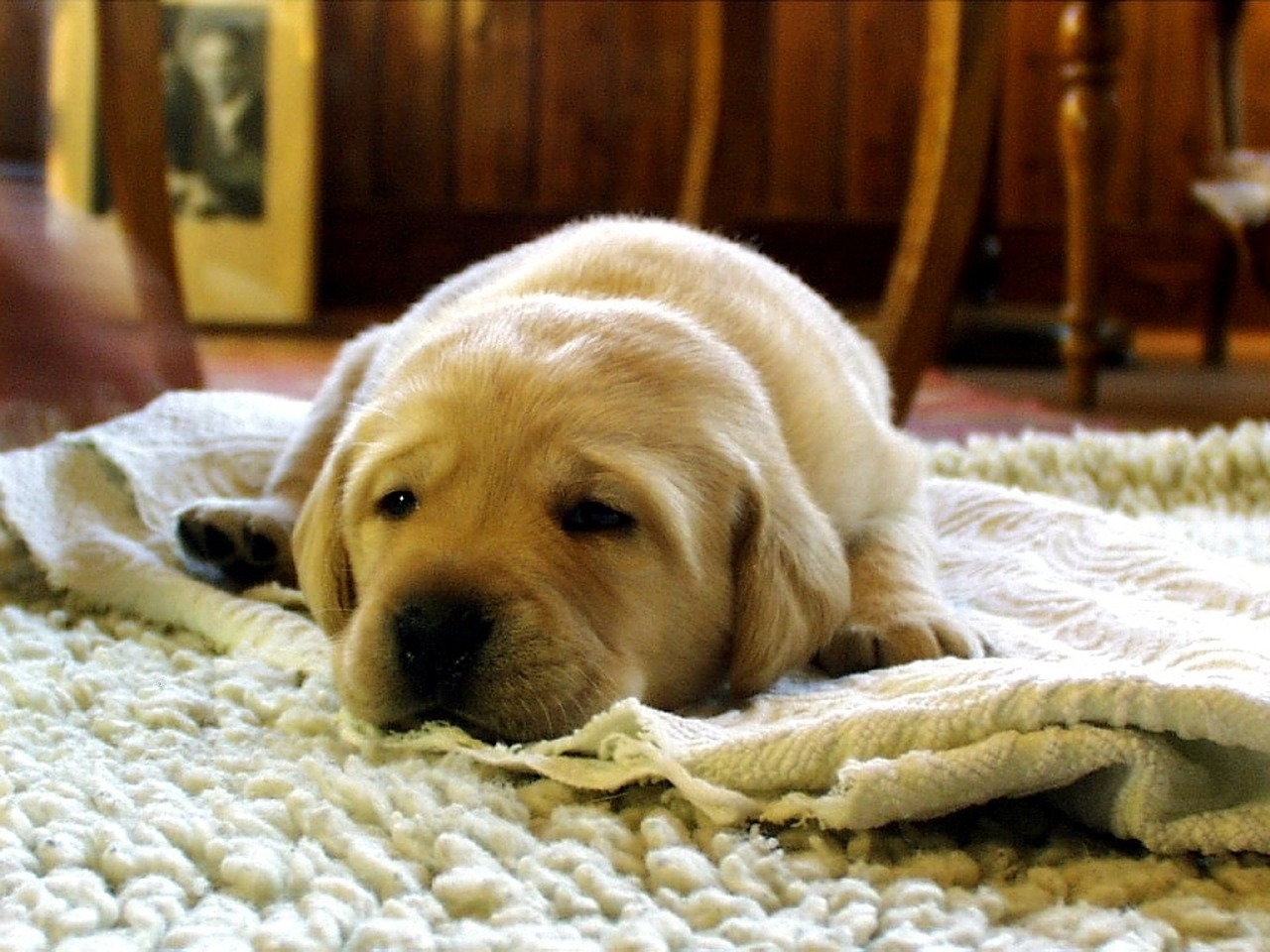Hundehaftpflicht Welpe