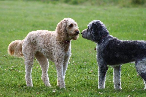 Hundebegegnungen: Zwei Hunde begegnen sich