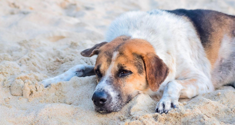 Hund herpes schnauze beim Herpesbläschen beim
